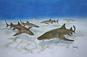 Sharks Paintings - A Bushel of Lemon Sharks by Jeff Lucas