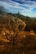 Southwestern Art Photos - A Cactus In The Sandia Mountains by Jeff  Swan