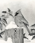 Cardinals Drawings - A Cardinal And Holly by Sarah Batalka