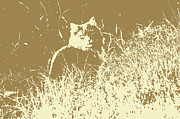 Happy Black Cats Posters - A cat in the grass Poster by Tommy Hammarsten