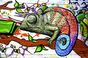 Graffiti Photo Framed Prints - A chameleon graffiti Framed Print by Fabrizio Troiani