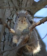 Wendy  Beatty - A Charming Gray Squirrel