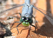 Dragonfly Eyes Posters - A Cheery Hello Poster by Carol Groenen