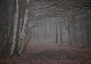 Haze Photo Prints - A Chill In The Trees Print by Odd Jeppesen