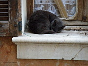 Ledge Photos - A Circled Up Cat  by Lainie Wrightson