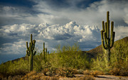 Southwest Landscape Metal Prints - A Cloudy Day in the Desert  Metal Print by Saija  Lehtonen