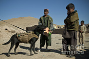 Featured Art - A Coalition Forces Military Working Dog by Stocktrek Images