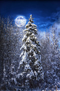 Snowy Night Photo Posters - A Cold Night in Northern Maine Poster by Gary Smith