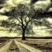 Dominic Piperata - A Cold Wind Blows