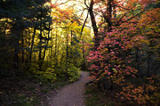 Fall Colors Autumn Colors Posters - A Colorful Path  Poster by Saija  Lehtonen