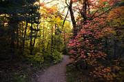 Saija  Lehtonen - A Colorful Path