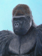 Gorilla Paintings - A Contemplative Gorilla by Margaret Saheed