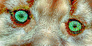 Kittens Mixed Media - A Cougar Kittens Eyes by Nadine Johnston