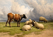 Country Setting Prints - A Cow and Five Sheep Print by Thomas Sidney Cooper