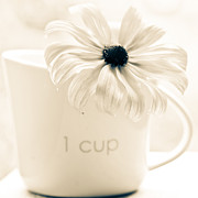 Flower Fine Art Posters - A cup of flower Poster by Constance Fein Harding