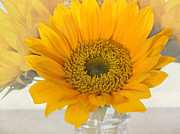 Sunflower Decor Prints - A Cup of Sunshine Print by Kim Hojnacki