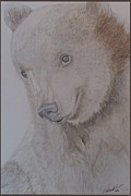 Portraits Drawings - A Cute Brown by Melissa Nankervis