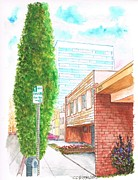 Santa Monica Paintings - A cypress in Pontios Ave and Santa Monica Blvd - Santa Monica-CA by Carlos G Groppa