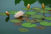 Floral Prints - A Day at the Lily Pond Print by Suzanne Gaff