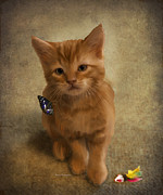 Claw Paintings - A Day in the Life of a 4-week Old Kitten by Angela A Stanton