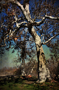 Tree Trunks Metal Prints - A Day Like This Metal Print by Laurie Search