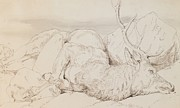 Grey Drawings Posters - A Dead Stag Poster by Sir Edwin Landseer