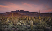 Southwest Landscape Metal Prints - A Desert Golden Hour  Metal Print by Saija  Lehtonen