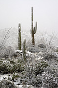Southwest Landscape Metal Prints - A Desert Snow Day  Metal Print by Saija  Lehtonen