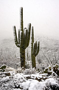 Southwest Landscape Metal Prints - A Desert Southwest Snow Day  Metal Print by Saija  Lehtonen