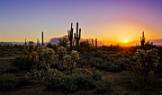 Southwest Landscape Metal Prints - A Desert Winter Sunrise  Metal Print by Saija  Lehtonen