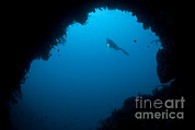 Cavern Metal Prints - A Diver Explores A Cavern In Gorontalo Metal Print by Steve Jones