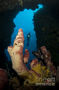 Cavern Metal Prints - A Diver Looks Into A Cavern Metal Print by Steve Jones