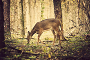A Doe In The Forest Print by Lena Auxier