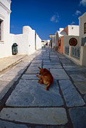 White Walls Framed Prints - A dog in siesta Framed Print by Aiolos Greek Collections