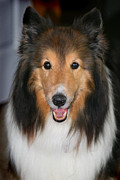 Karen Adams Metal Prints - A Dog Named Beau Metal Print by Karen Adams