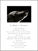 Help Support Animal Rescue - A Dogs Prayer - White by Angela Rath