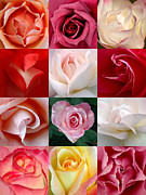 Dozen Red Roses Posters - A Dozen Roses Poster by Jerry Downs