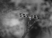 Dragon Fly Photos - A Dragon Awaits by Thomas Young
