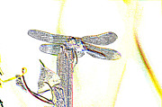 Dragonflies Metal Prints - A Dragonfly In My Dreams Metal Print by Jeff  Swan