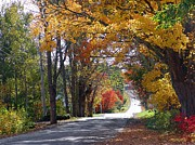 Annapolis Valley Posters - A Drive Through Autumn Beauty Poster by Janet Ashworth