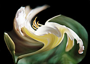 A Drunk Daylily Bloom Print by ImagesAsArt Photos And Graphics