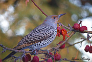 Neutral Colours Framed Prints - A Fall Flicker Framed Print by Laura Bentley