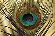 Martina Fagan - A Feather