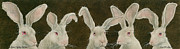 Bunny Paintings - A few gray hares... by Will Bullas