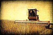 A Field For Harvest Print by Lincoln Rogers