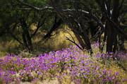 Saija  Lehtonen - A Field of Wildflowers