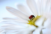 Ladybird Photos - A Fine Lady by Aaron Aldrich
