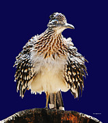 DiDi Higginbotham - A Fluffy Roadrunner