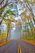 Fall Colors Autumn Colors Framed Prints - A Foggy Drive Into Autumn - Blue Ridge Parkway Framed Print by Dan Carmichael