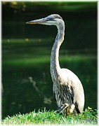 Mel Steinhauer Acrylic Prints - A Frequent Visitor 3 Acrylic Print by Mel Steinhauer